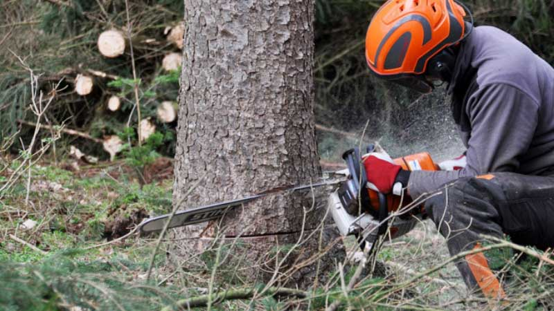 Is Cutting Wet Wood Bad for Chainsaw