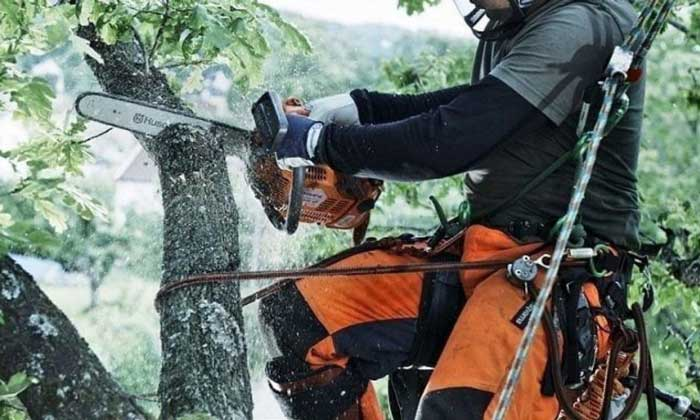 Chainsaw Chaps Standards